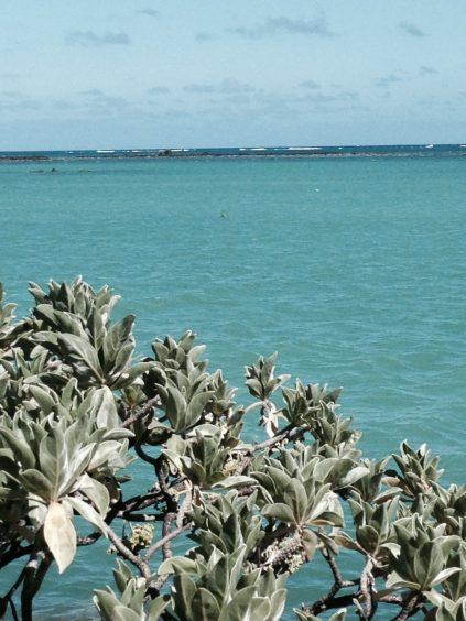 paradise cove, mauritius, mauritius boutique hotels